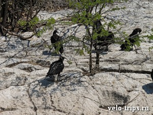 Mexico, vultures in Sumidero canyon