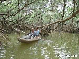 Mexico, Celestun. Mangroove trees kayaking
