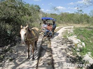 Mexico, Cuzama. Horse railroad tour around cenotes