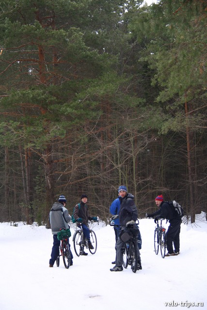 Bicycles in the winter forest