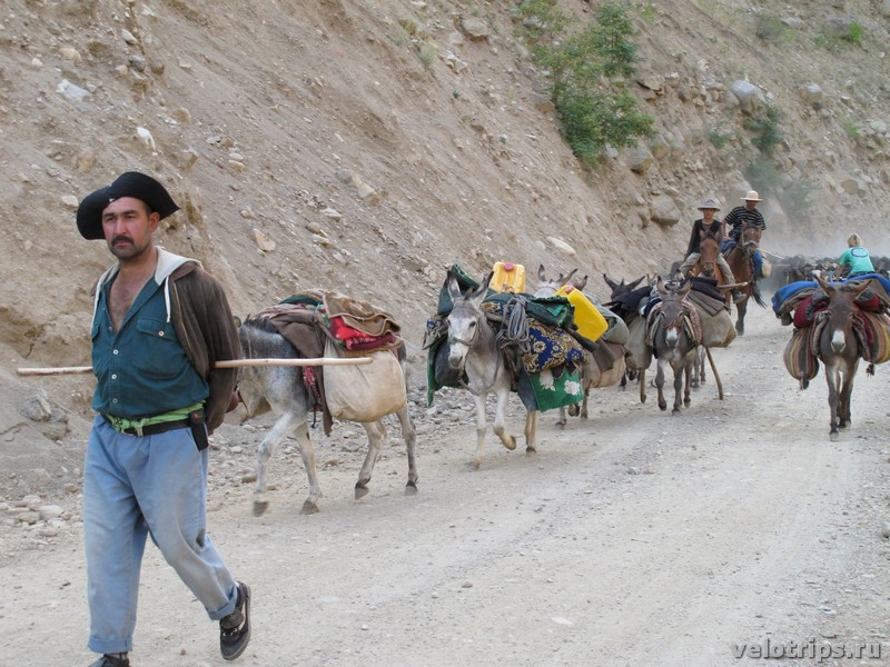 Tajikistan, Dushanbe. Shepherds with donkeys