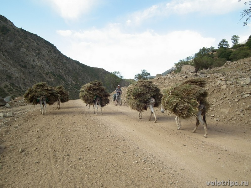 Tajikistan. Donkeys loaded with hay
