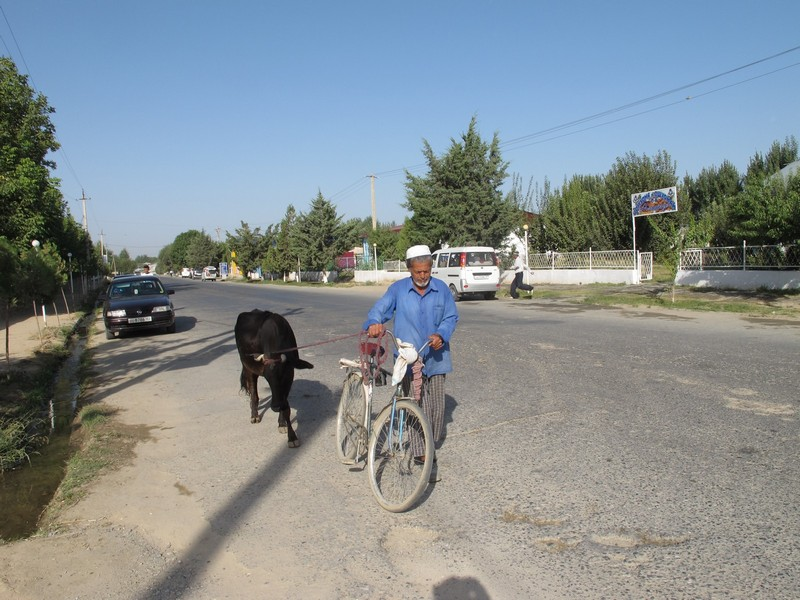 Panjakent. Countryman with bicycle and cow