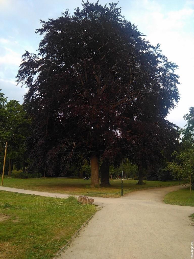 Черное дерево мы обфотографировали. Приехали в Расин, а там таких полно.