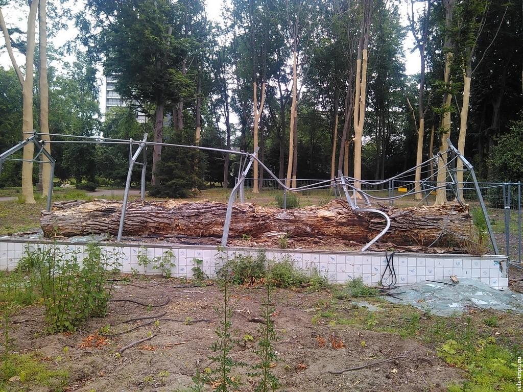 Непонятный разрушенный памятник дереву